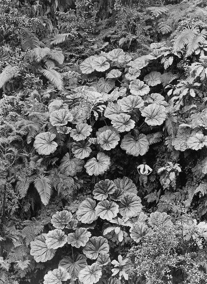 foto-inedite-archivio-national-geographic-found-07