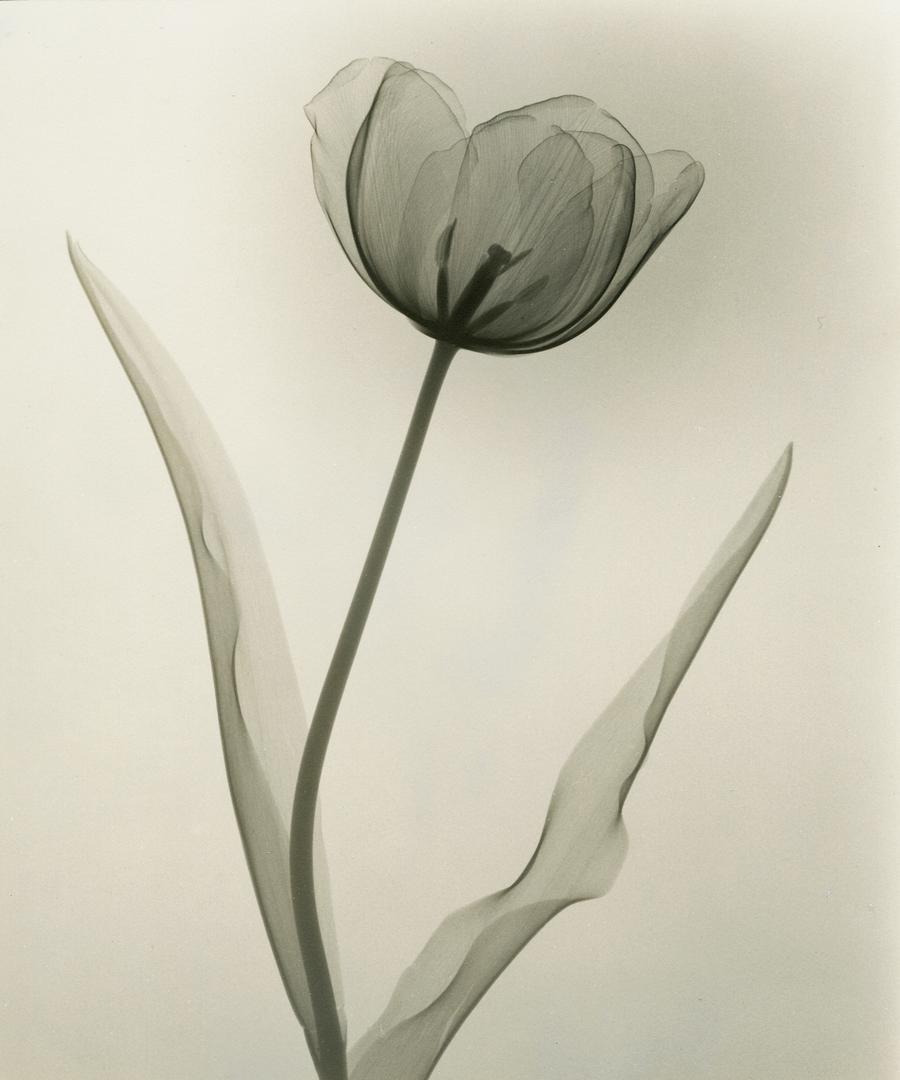 foto-raggi-x-fiori-dain-tasker-01