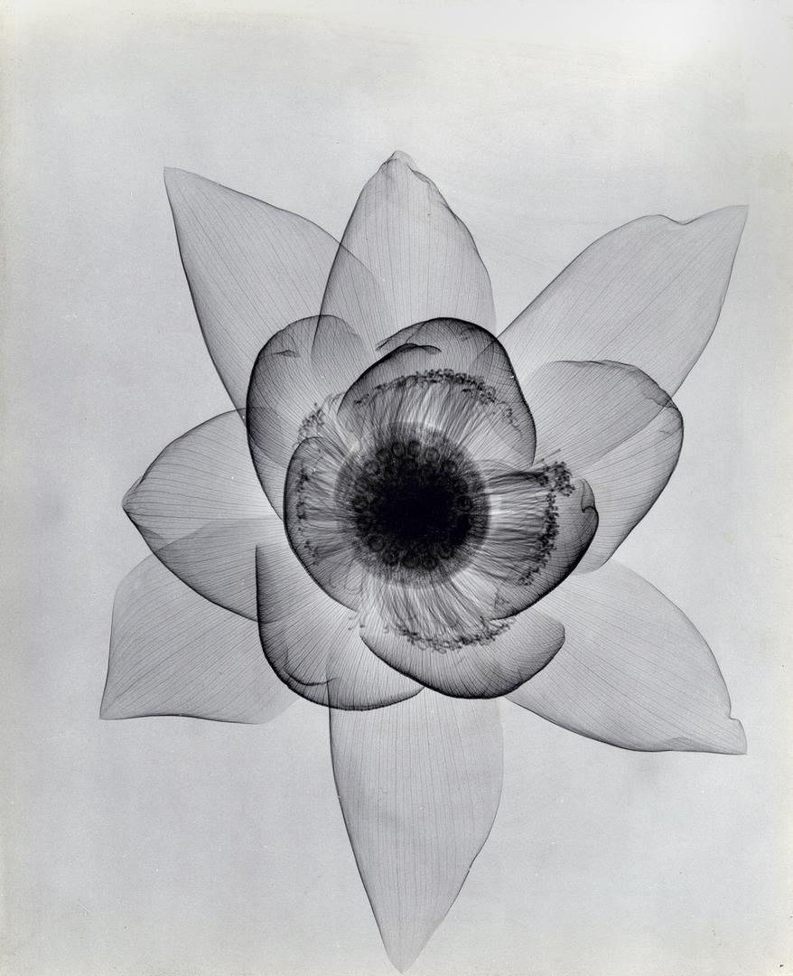 foto-raggi-x-fiori-dain-tasker-02