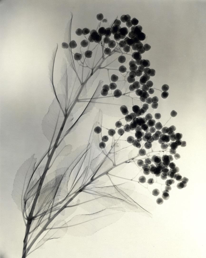 foto-raggi-x-fiori-dain-tasker-03