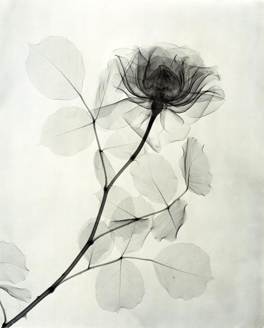 foto-raggi-x-fiori-dain-tasker-04
