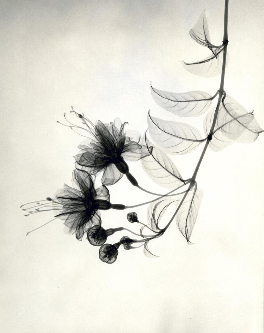 foto-raggi-x-fiori-dain-tasker-06