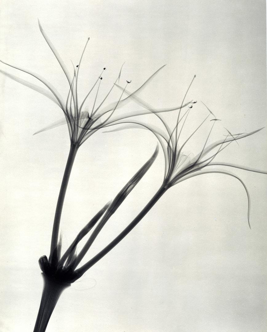 foto-raggi-x-fiori-dain-tasker-07
