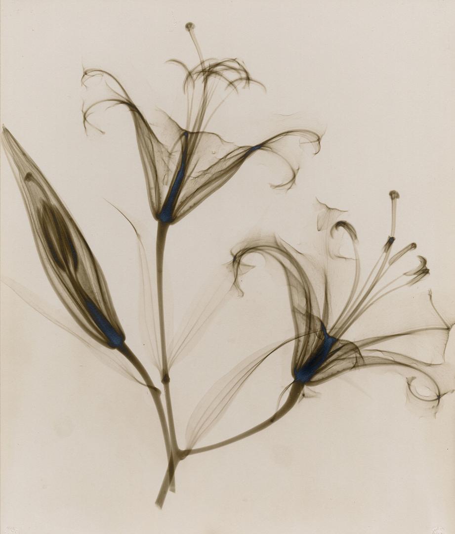 foto-raggi-x-fiori-dain-tasker-09