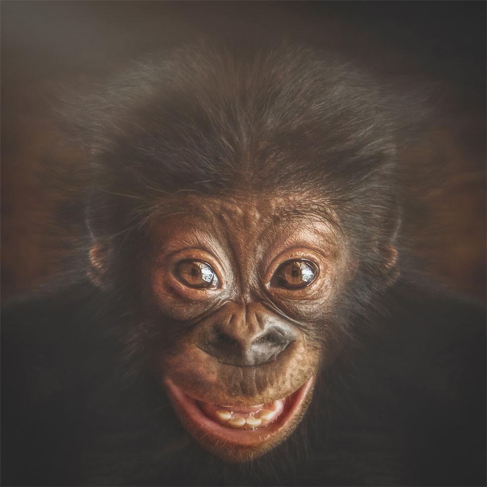 fotografia-ritratti-scimmie-espressioni-umane-manuela-kulpa-02