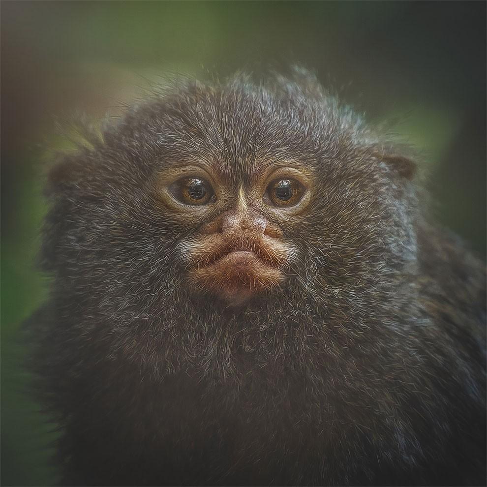 fotografia-ritratti-scimmie-espressioni-umane-manuela-kulpa-04