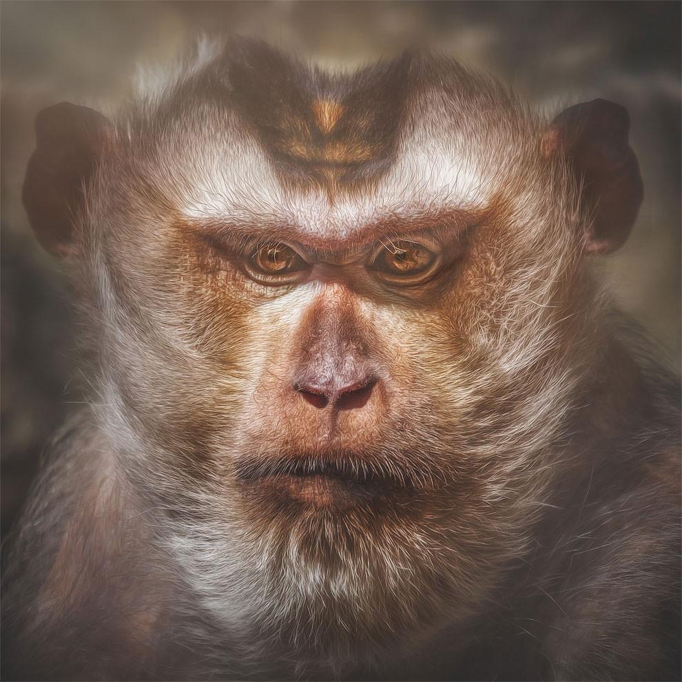 fotografia-ritratti-scimmie-espressioni-umane-manuela-kulpa-11