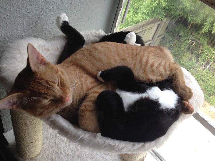 gatti-adottati-dormono-insieme-amaca-barnaby-stoche-01