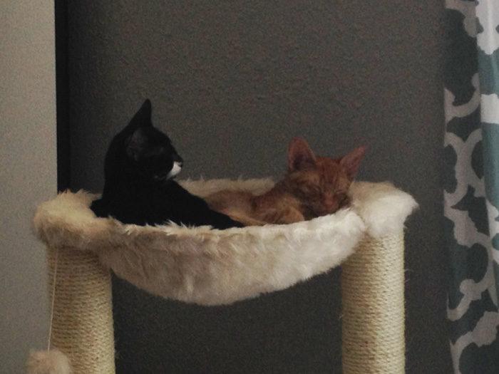 gatti-adottati-dormono-insieme-amaca-barnaby-stoche-03