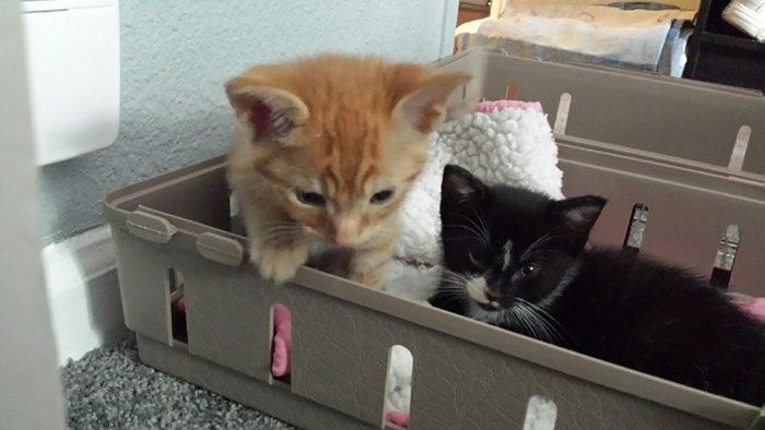 gatti-adottati-dormono-insieme-amaca-barnaby-stoche-04