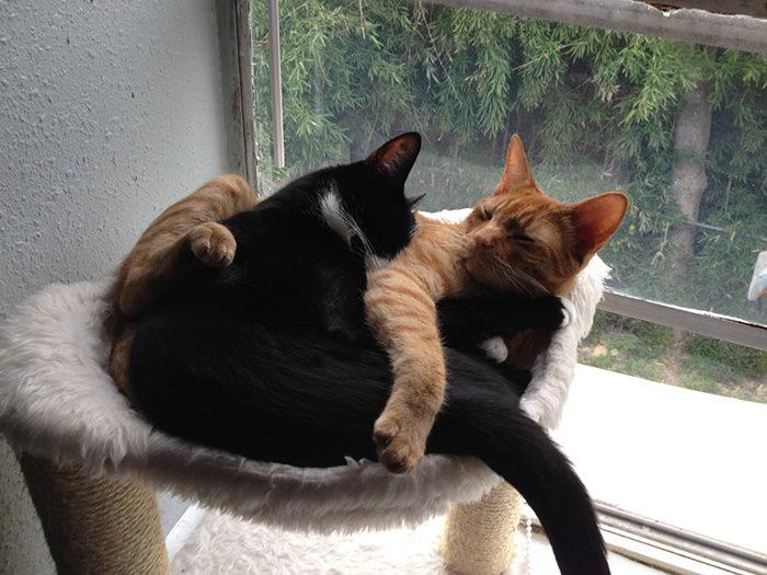 gatti-adottati-dormono-insieme-amaca-barnaby-stoche-05