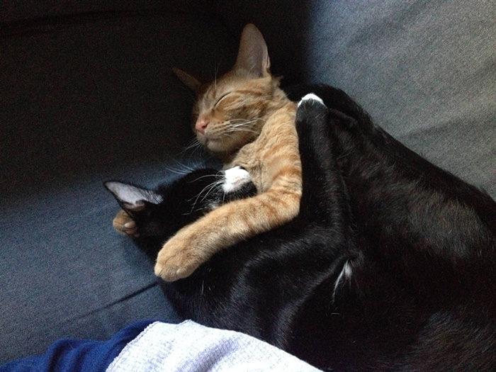 gatti-adottati-dormono-insieme-amaca-barnaby-stoche-07