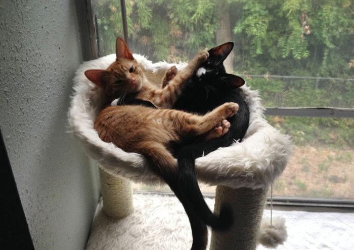 gatti-adottati-dormono-insieme-amaca-barnaby-stoche-08