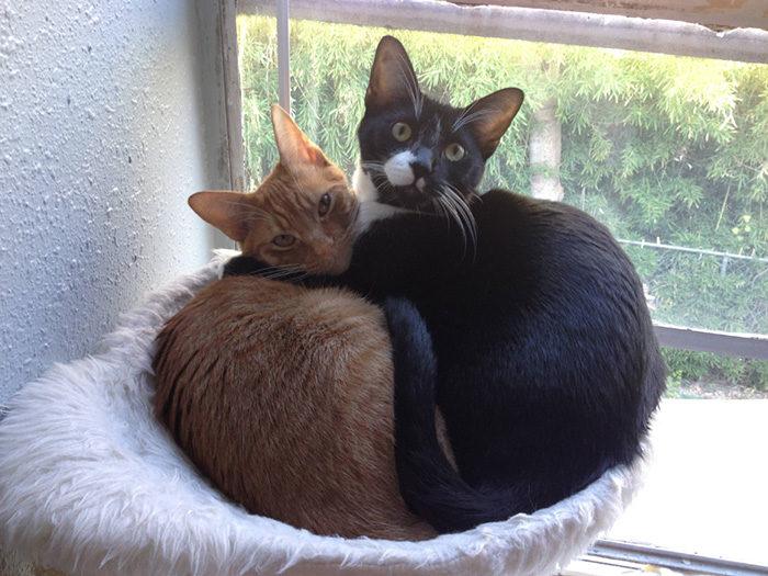 gatti-adottati-dormono-insieme-amaca-barnaby-stoche-09