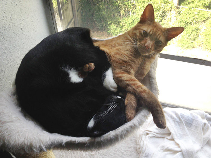 gatti-adottati-dormono-insieme-amaca-barnaby-stoche-10