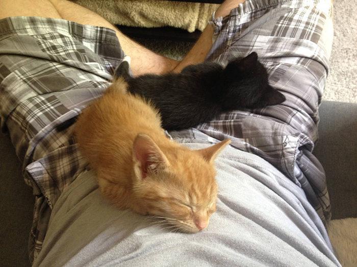 gatti-adottati-dormono-insieme-amaca-barnaby-stoche-11