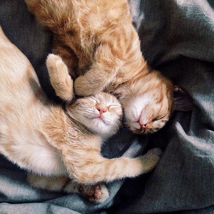 gatti-rossi-inseparabili-anya-yukhtina-15