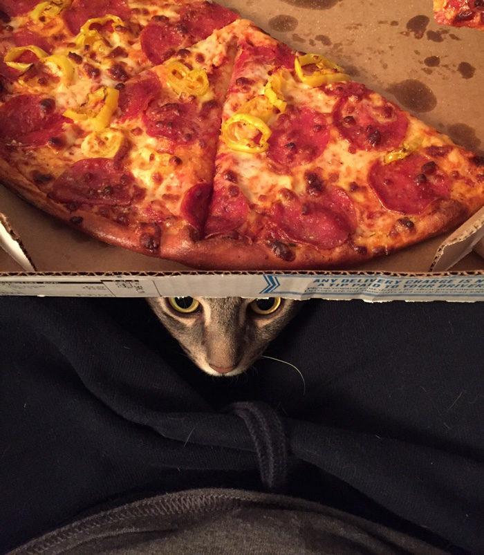 gatto-adottato-siede-come-una-persona-wilbur-3