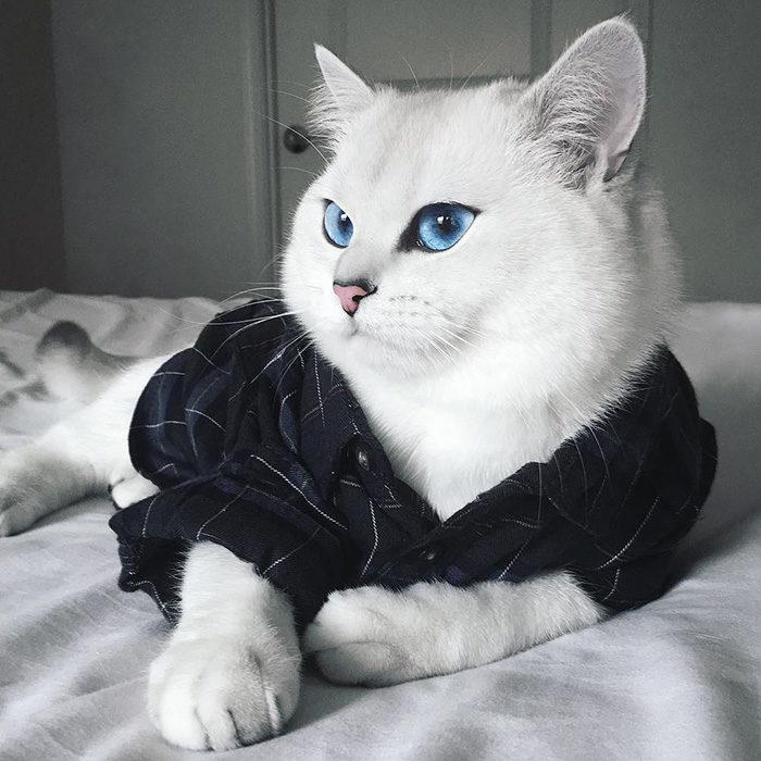 gatto-occhi-belli-coby-01