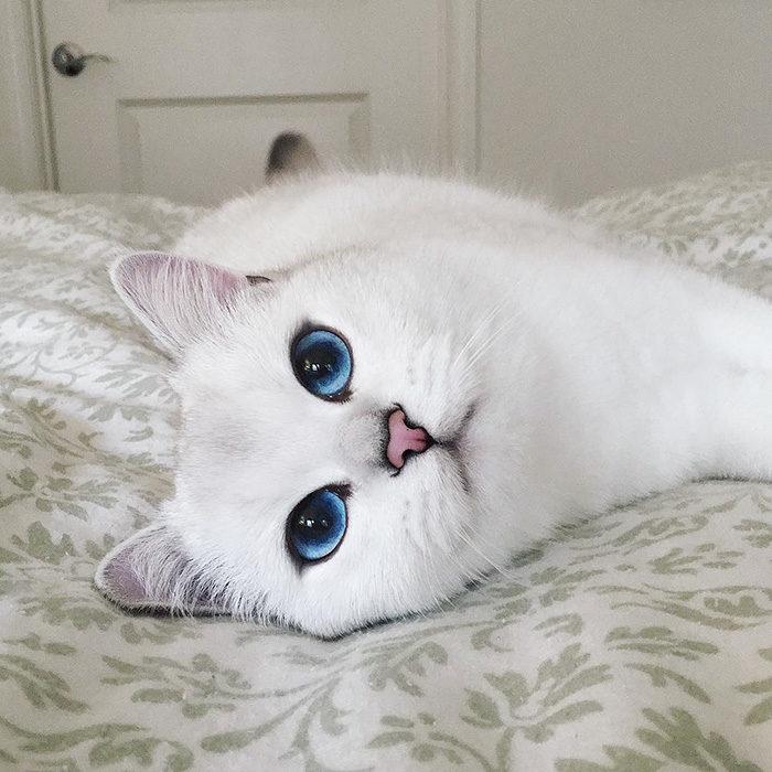 gatto-occhi-belli-coby-02