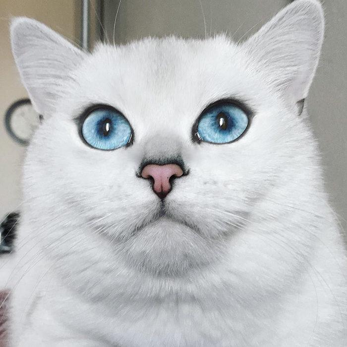 gatto-occhi-belli-coby-03