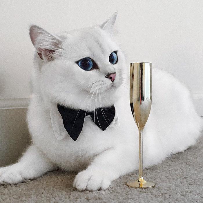 gatto-occhi-belli-coby-04