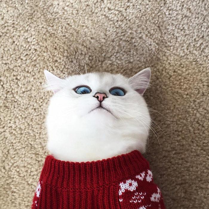 gatto-occhi-belli-coby-06