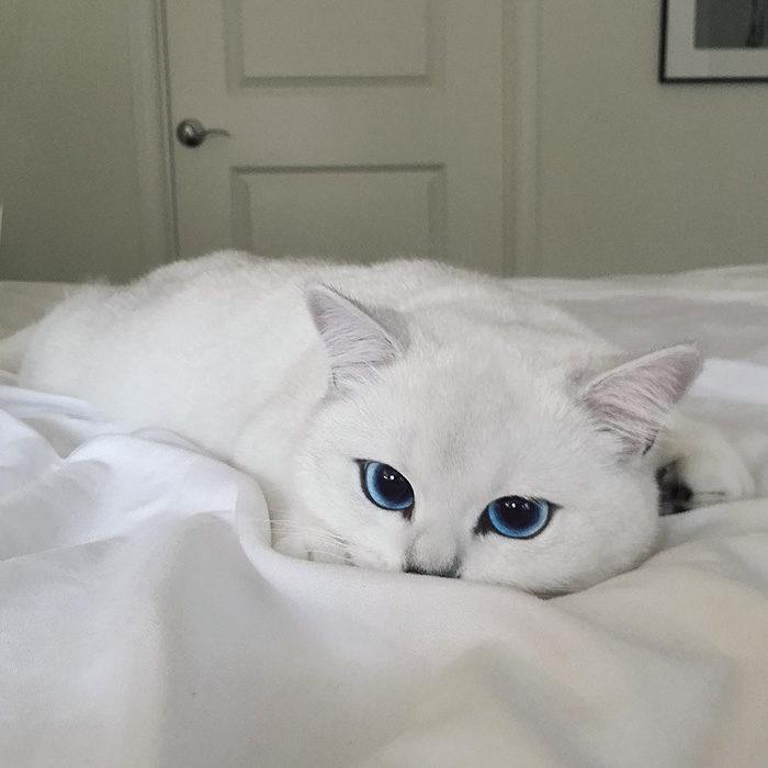 gatto-occhi-belli-coby-07