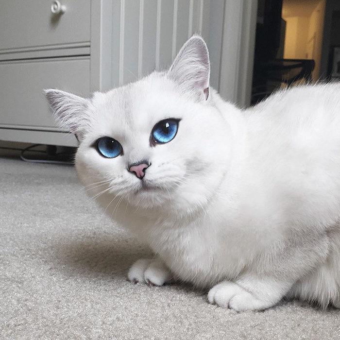 gatto-occhi-belli-coby-08