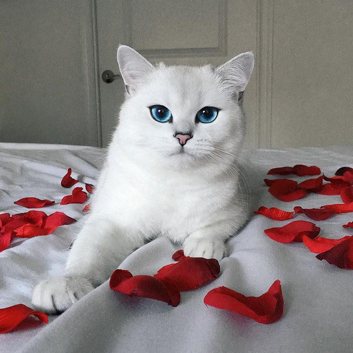 Il gatto con gli occhi pi belli del mondo keblog for Gatti con occhi diversi