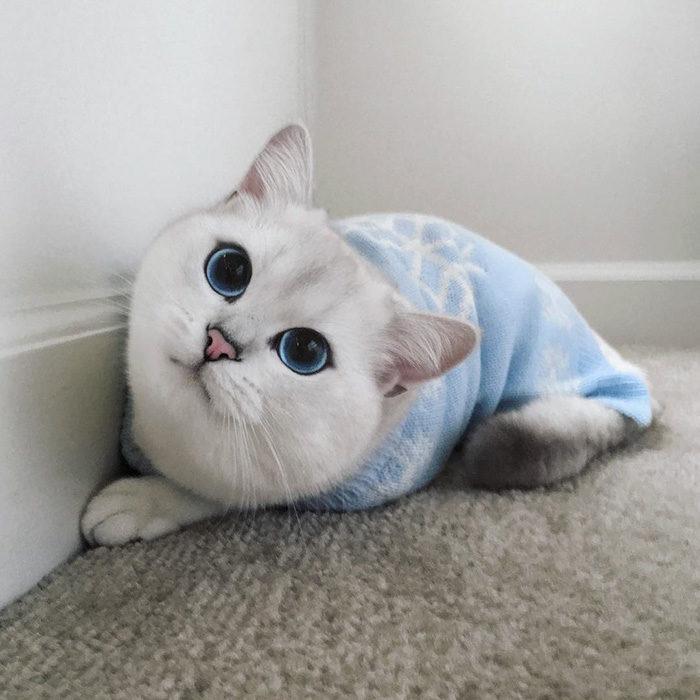 gatto-occhi-belli-coby-10