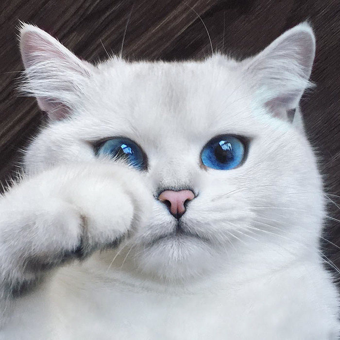 Il Gatto Con Gli Occhi Più Belli Del Mondo Keblog