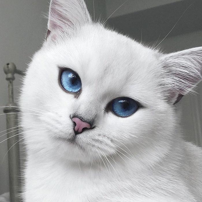 gatto-occhi-belli-coby-12