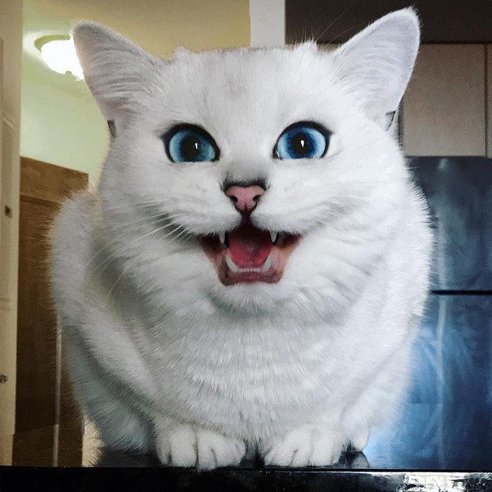 gatto-occhi-belli-coby-13