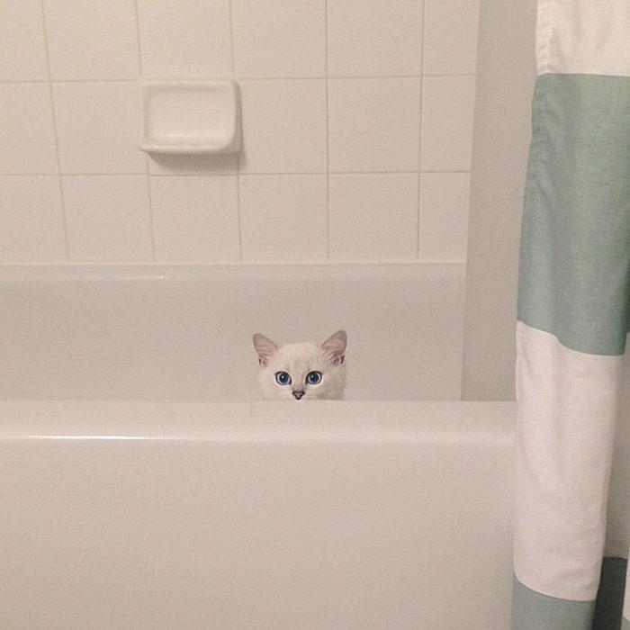 gatto-occhi-belli-coby-14