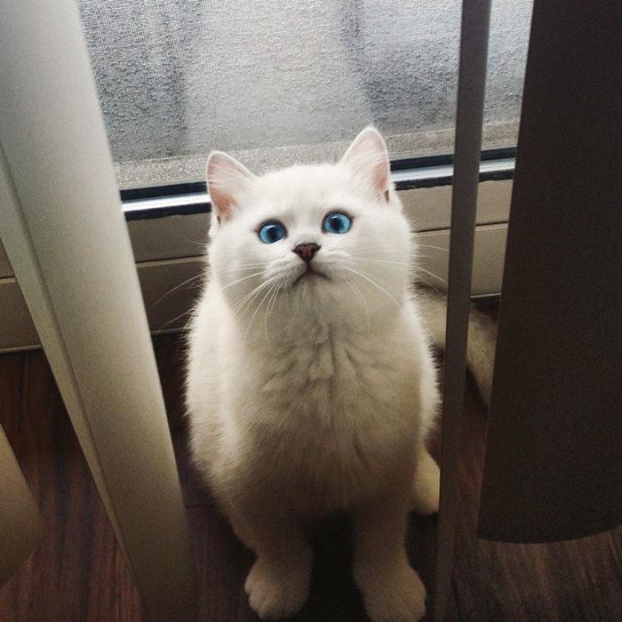gatto-occhi-belli-coby-15