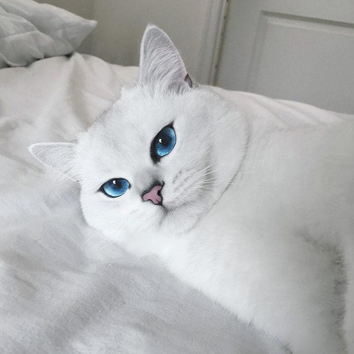 gatto-occhi-belli-coby-16