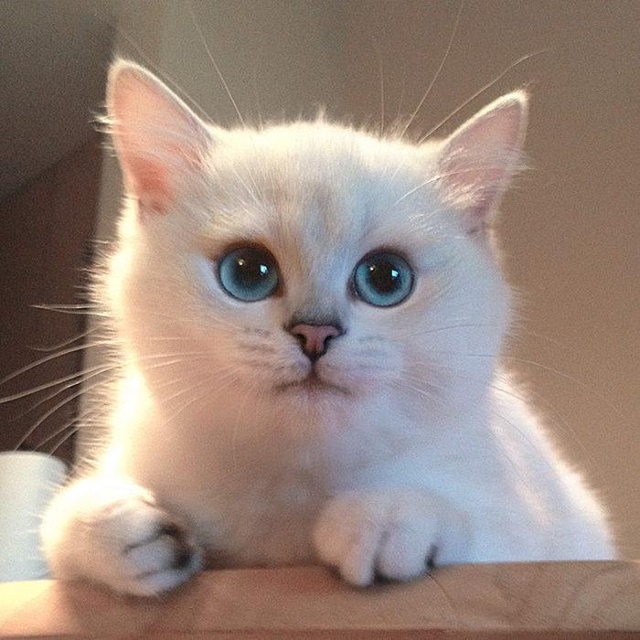 gatto-occhi-belli-coby-17