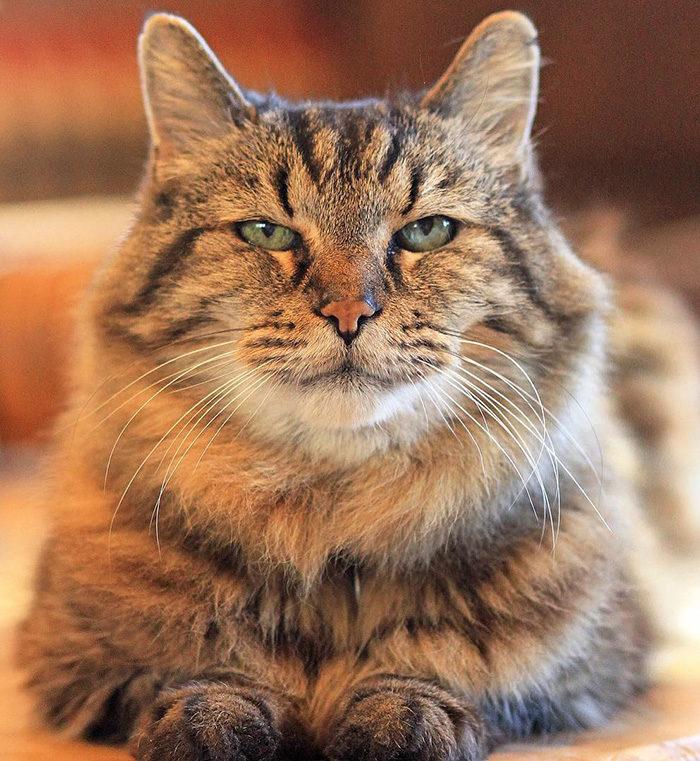 il-gatto-piu-vecchio-del-mondo-guinness-record-corduroy-01
