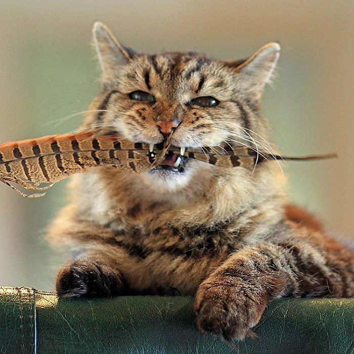 il-gatto-piu-vecchio-del-mondo-guinness-record-corduroy-02