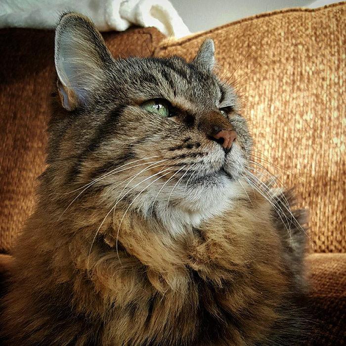 il-gatto-piu-vecchio-del-mondo-guinness-record-corduroy-06