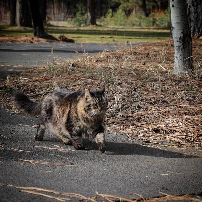 il-gatto-piu-vecchio-del-mondo-guinness-record-corduroy-07