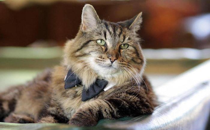 il-gatto-piu-vecchio-del-mondo-guinness-record-corduroy-09