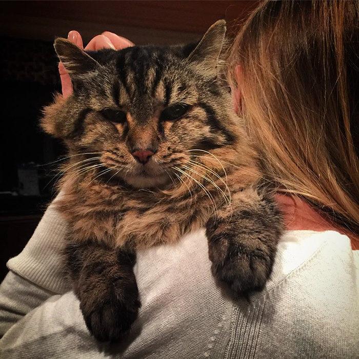 il-gatto-piu-vecchio-del-mondo-guinness-record-corduroy-11