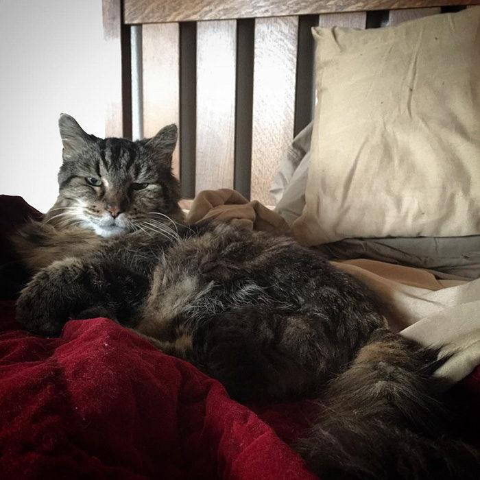il-gatto-piu-vecchio-del-mondo-guinness-record-corduroy-13