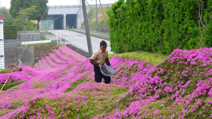 marito-pianta-fiori-moglie-ceca-kuroki-shintomi-01