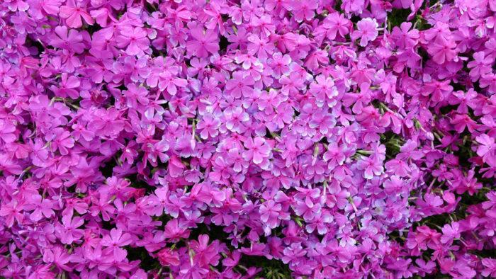 marito-pianta-fiori-moglie-ceca-kuroki-shintomi-03