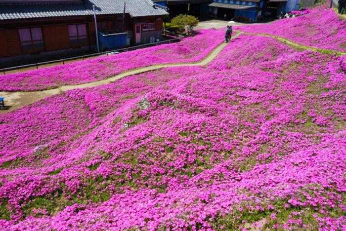 marito-pianta-fiori-moglie-ceca-kuroki-shintomi-04