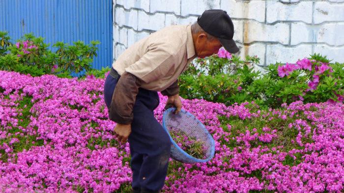 marito-pianta-fiori-moglie-ceca-kuroki-shintomi-05
