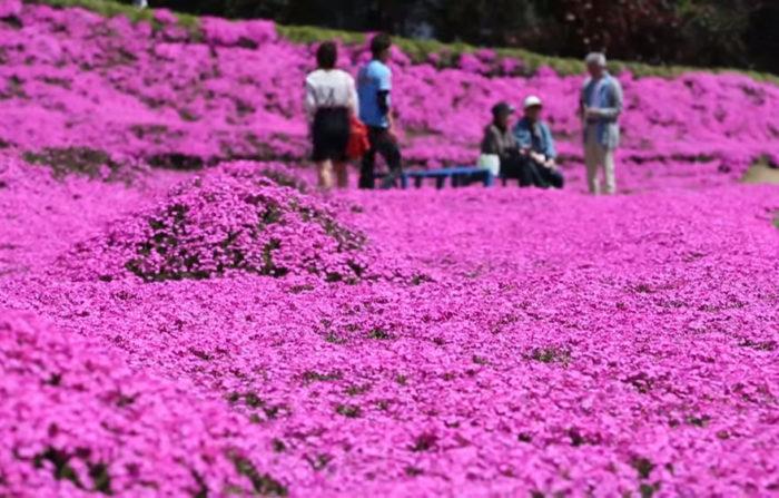 marito-pianta-fiori-moglie-ceca-kuroki-shintomi-06